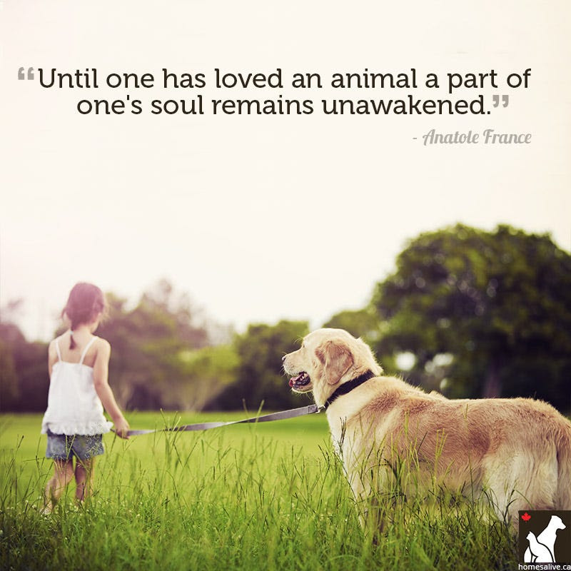 Pet Lover Quotes. QuotesGram