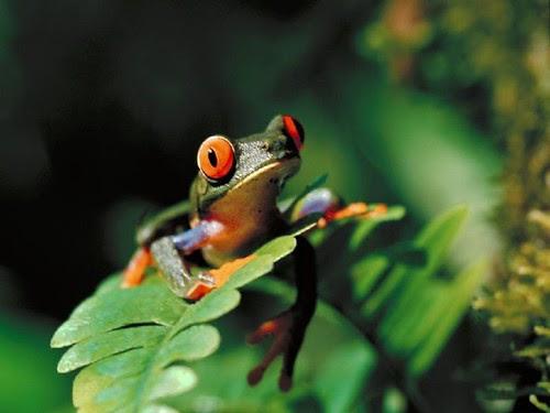 Animals, nature, Photography