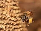 Las diez picaduras de insecto más dolorosas