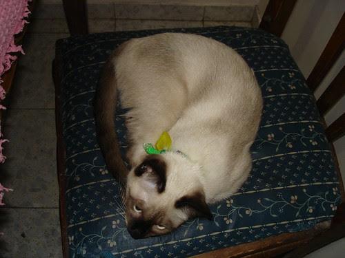 Catschka the chair thief