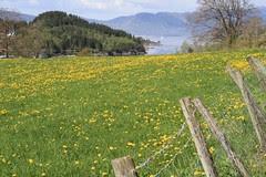 våren 2009 065
