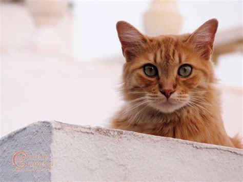Ginger Cat   Catnip Camera