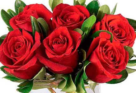 Significado De Las Rosas Por Su Color