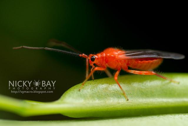 Hemipteran... - DSC_1875