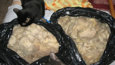 2 lovely bags of fleece undergoing inspection.