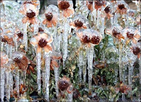 Ice on garden flowers in Oklahoma City, during the ice storms in parts of the US. Sent in to the BBC by Seth McNayr