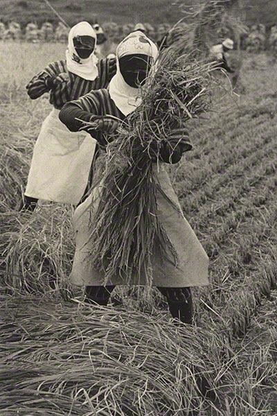 Rice Harvesting, Yamagata Prefecture, 1955, Hiroshi Hamaya, gelatin silver print