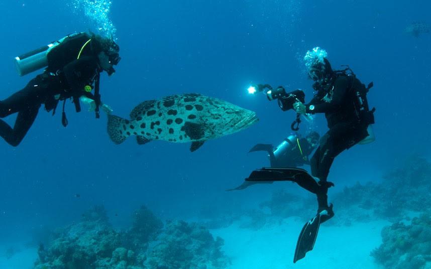 Parakseno.gr : coral 3 Ο μαγικός κόσμος του μεγάλου κοραλλιογενούς υφάλου