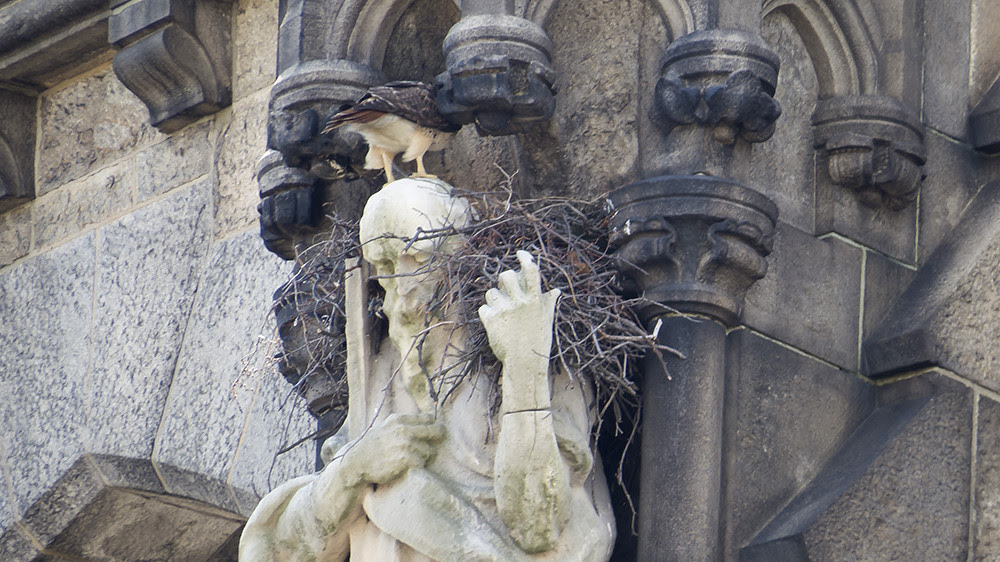 Cathedral Nest