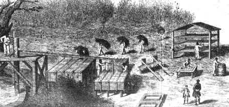 Slaves working on an Indigo Plantation
