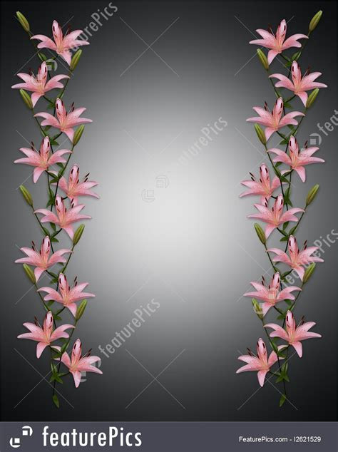 Illustration Of Asian Lily Flowers Border On Black