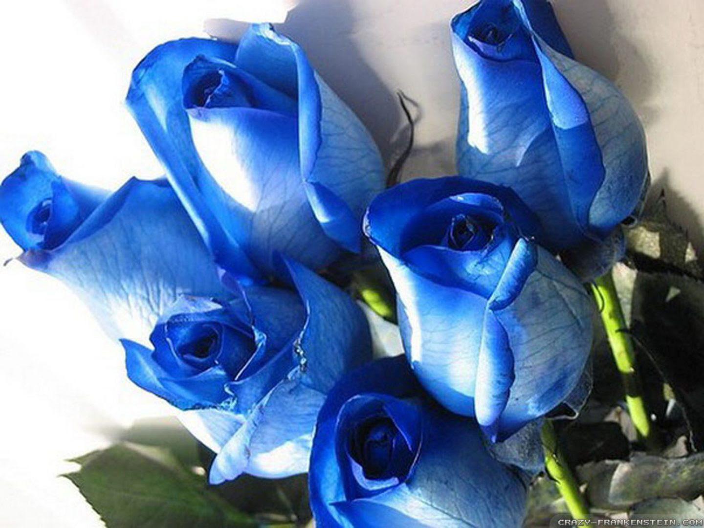 Ramos De Rosas Azules Imágenes Y Fotos
