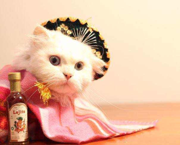 10 Terrifyingly Pawsome Halloween Cat Costumes