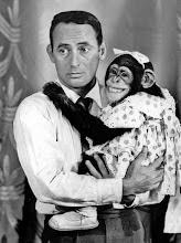 chimpanzees will rip yo face off