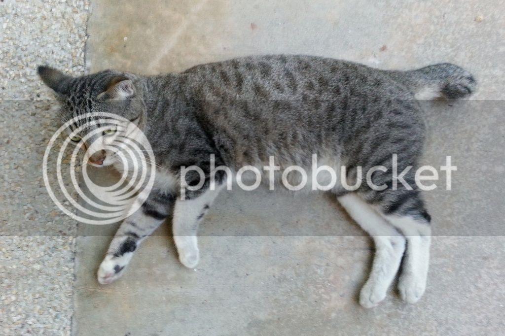 photo CatJRT17May12.jpg