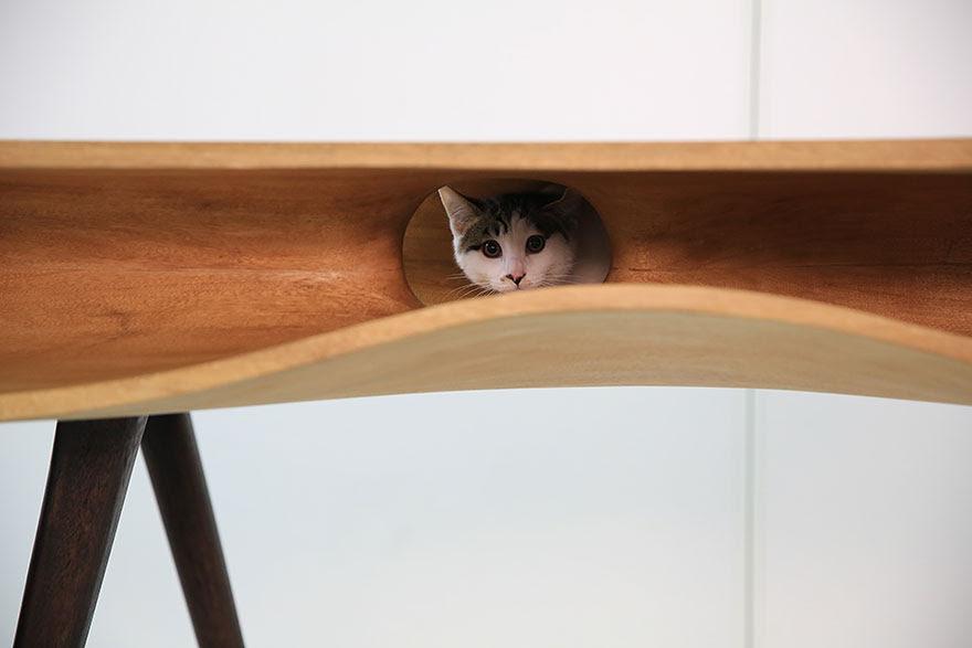 moveis-para-gatos-8