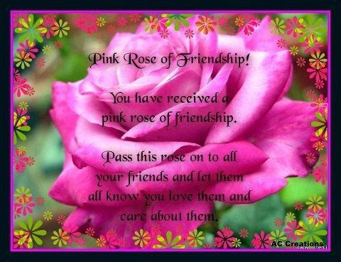 The Pink Rose Of Friendship Pictures Photos And Images For