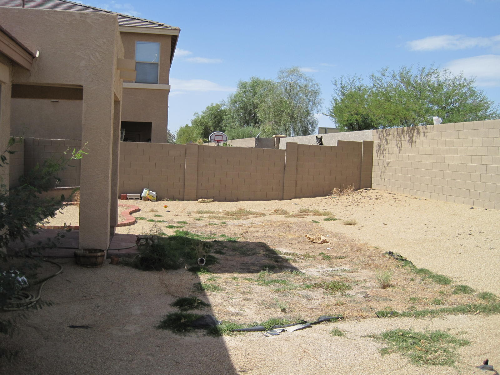 Whats Would Be The Cheapest Way To Landscape This Yard Rental New