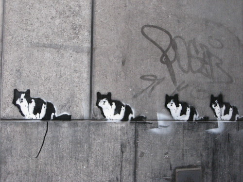 Cats on a row
