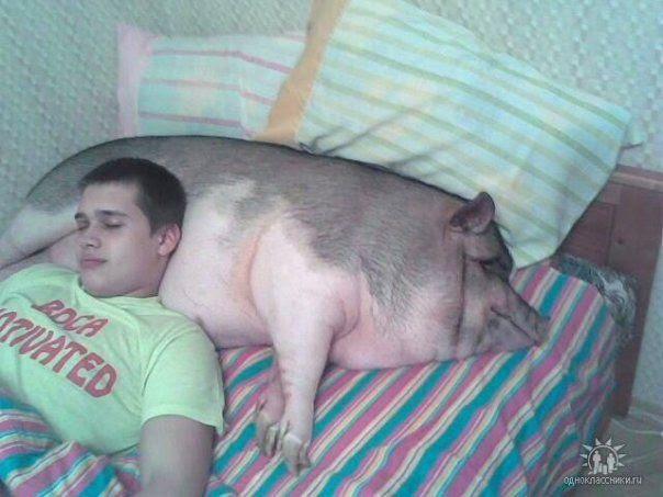 dormir cerdo Dormir con un cerdo