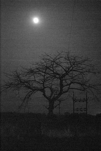the full moon and the tree and the electric pole