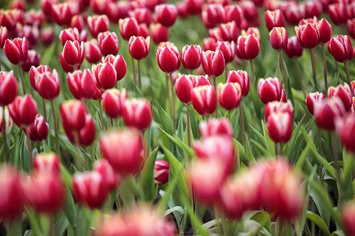 prettylittleflower:  spring 春天來了 (by Thunderbolt_TW)