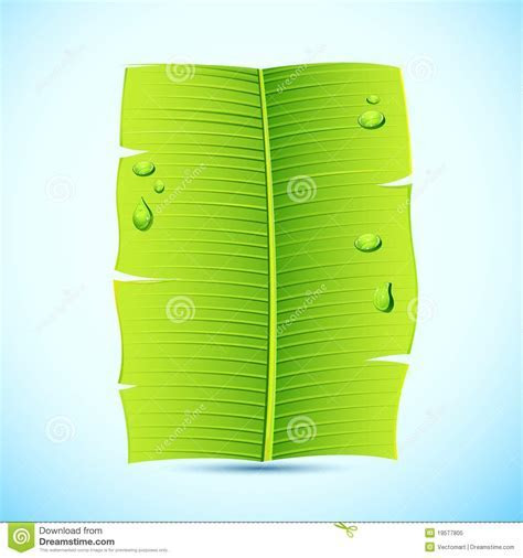 Banana Leaf Invitation Letter Royalty Free Stock Photo