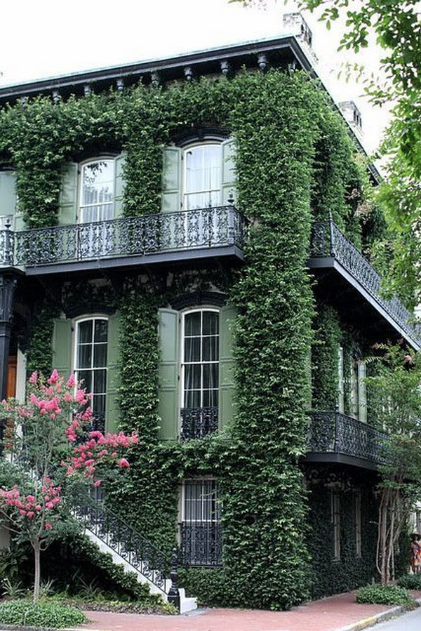 Problems that you face in Ivy houses with hanging herbs