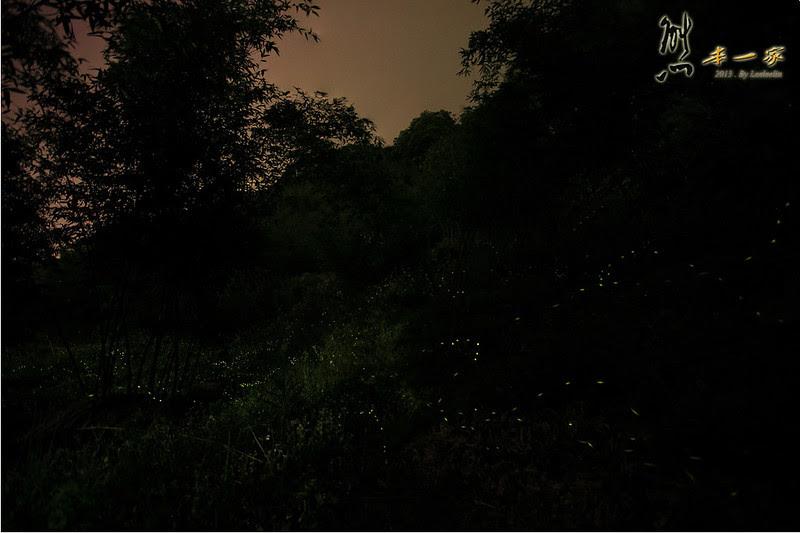 [三峽景點賞螢] 五寮國小周邊賞螢火蟲