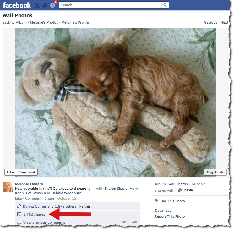 Puppy and Teddy Bear - Facebook Post