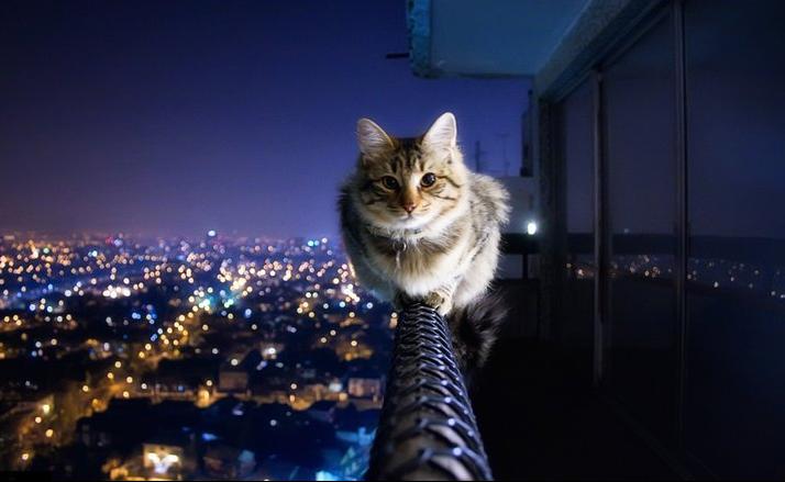 TXJ34 Brave Kitty [Picture]