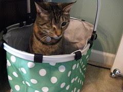 Maggie claims Jeni's new shopping bag