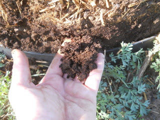 New Composted Soil