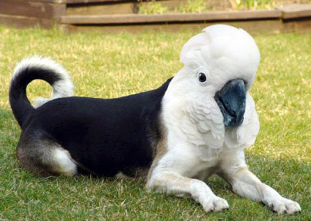 cockatoo dog Photoshop | Tacky Harper's Cryptic Clues
