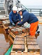 Gli uomini della Odyssey Marine stivano i lingotti