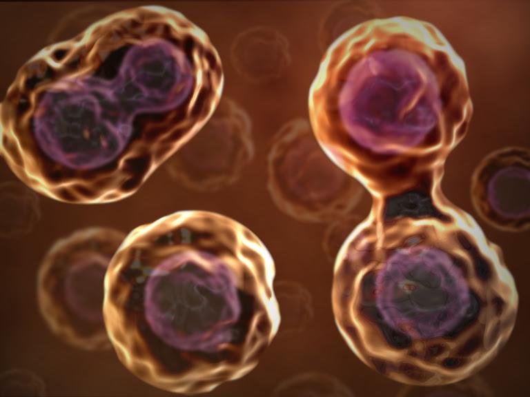 Pembelahan Sel Mitosis dan Meiosis