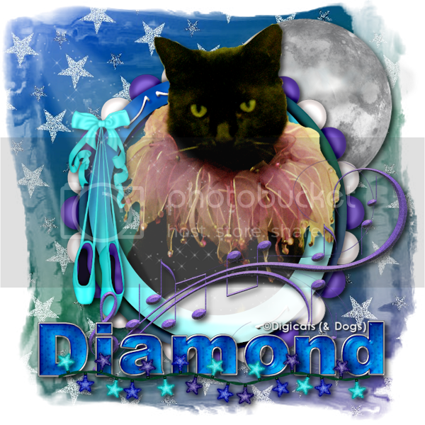 Miss Diamond: Cats