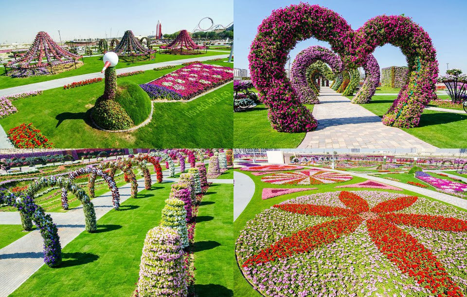 Photos of Dubai Miracle Garden