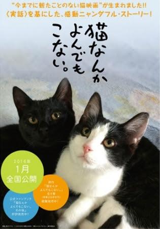 貓咪去哪兒/為什麼貓都叫不來(Cats Don't Come When You Call)poster