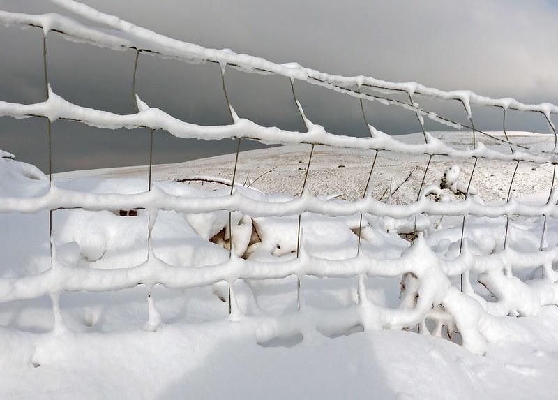 29202 - Snowy Scenes