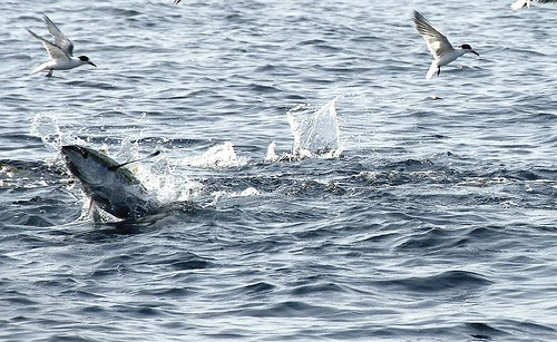 TUNA FISHING EXCURSION - 16