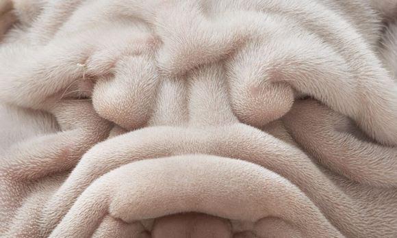Fotos de cachorros 2