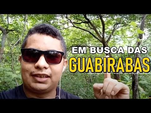 Vídeo   Em busca das Guabirabas - Você conhece essa fruta?