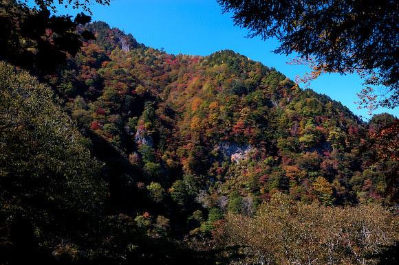20111007-DSC_2864Autumn leaves