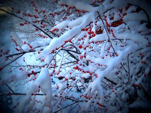 Snow! Again.