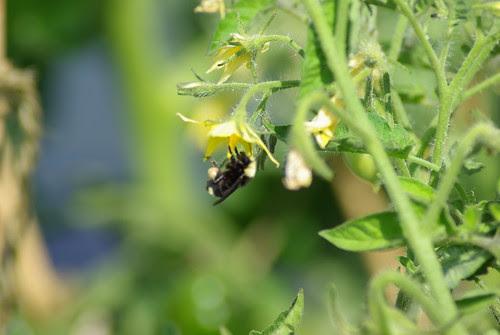 2009-07-26 Garden Related (5)
