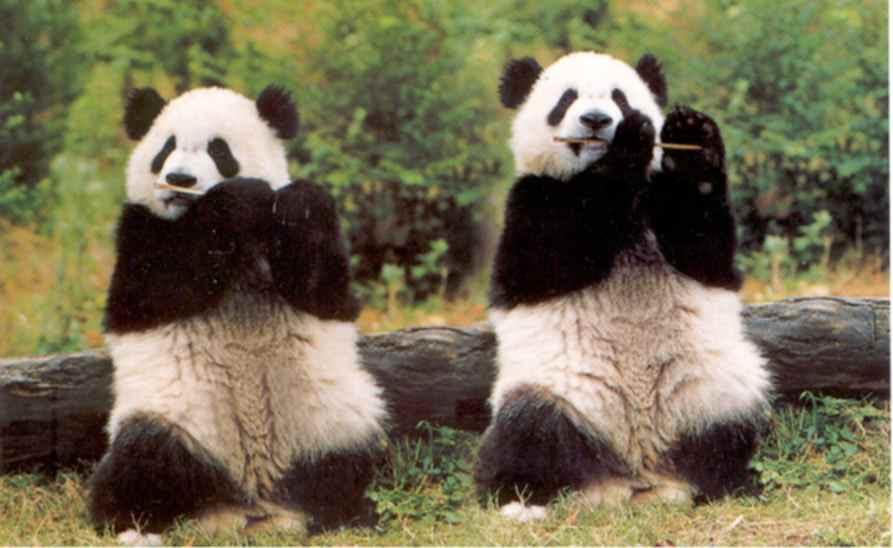 http://filmcrithulk.files.wordpress.com/2011/05/panda1.jpg