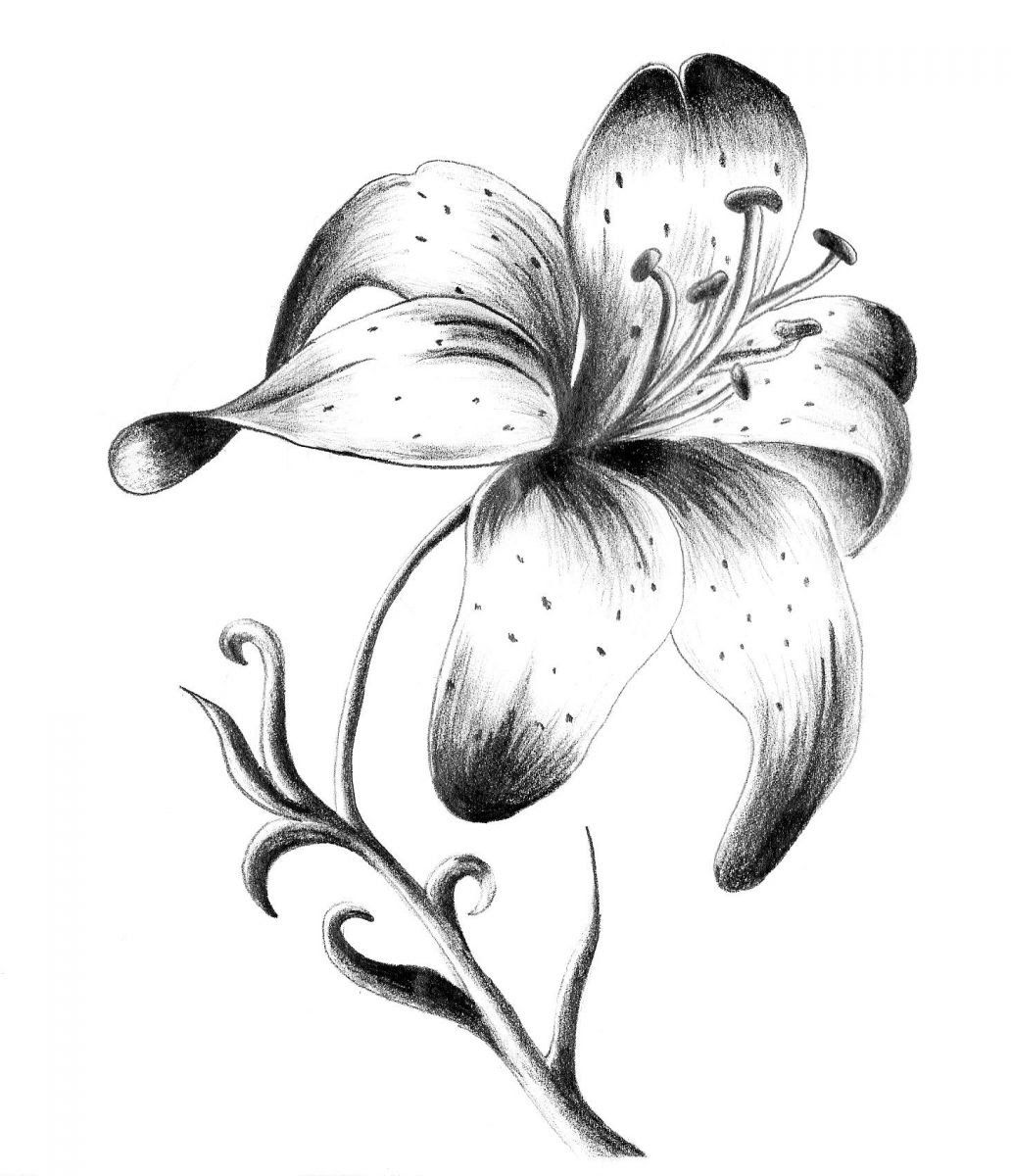 Black And White Lily Tattoo Design Idea