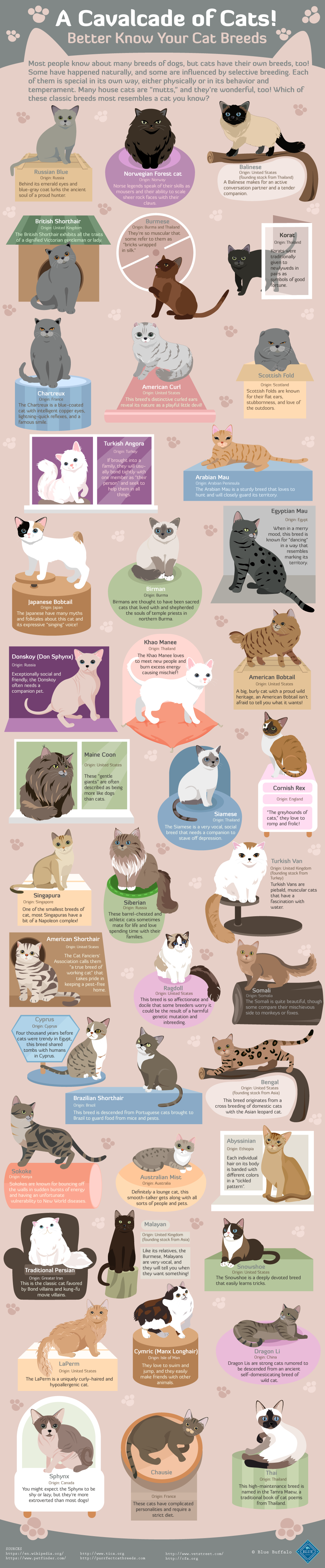 Cat breeds around the world