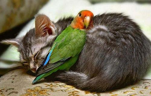 imagenes de amistad de pajaritos Imágenes tiernas de pajaritos